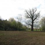 Plocha je připravena - Pohled na upravenou plochu s dubem v pozadí nás těší