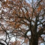 Stromky v sadu, jabloně, hrušně, švestky, renklody, višně, ořechy a jedlý kaštan -