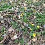 Jaro dorazilo i do našeho sadu..... -